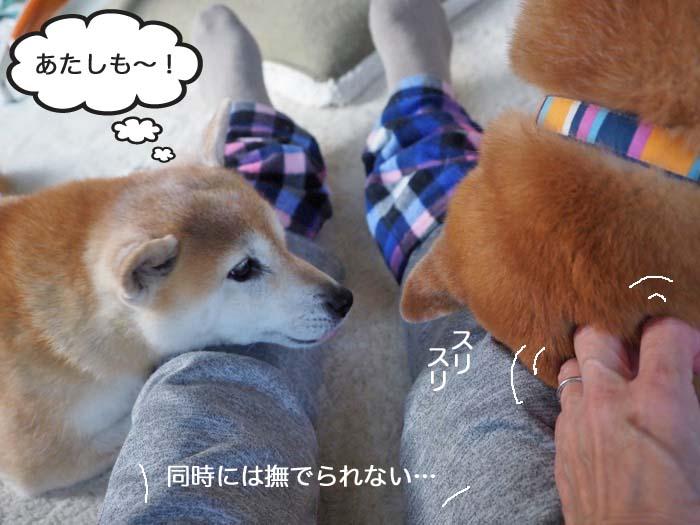 27日夕ブログ6