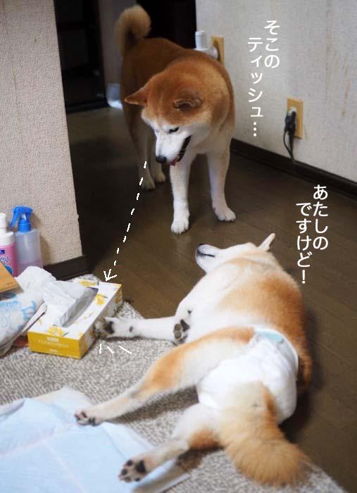 28日夕ブログ3
