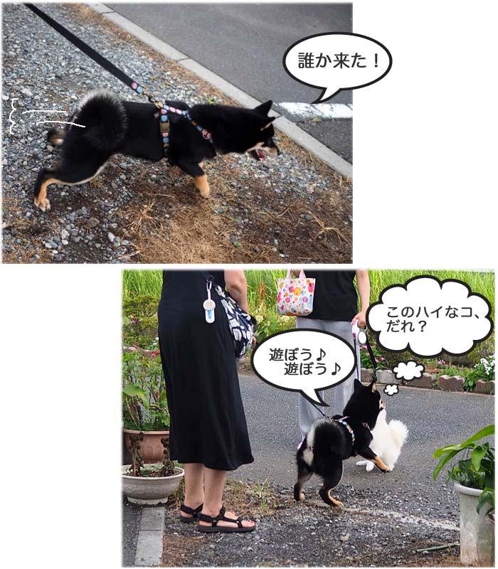 9日夕ブログ5