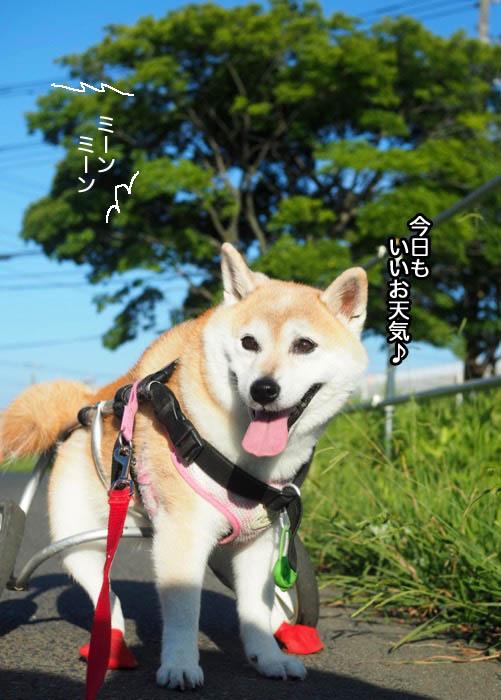 23日夕ブログ2