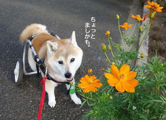 11日夕ブログ2