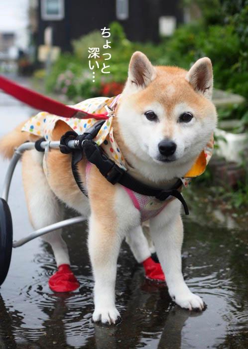 15日夕ブログ4