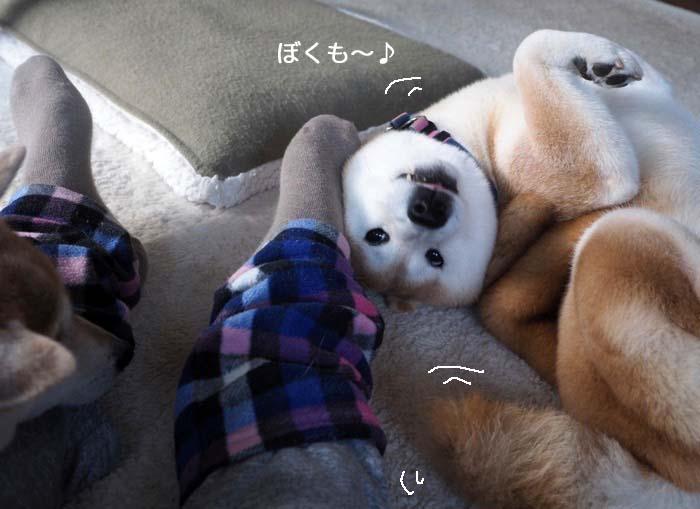27日夕ブログ4