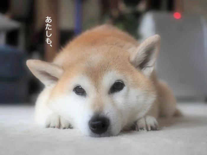 11日夕ブログ4