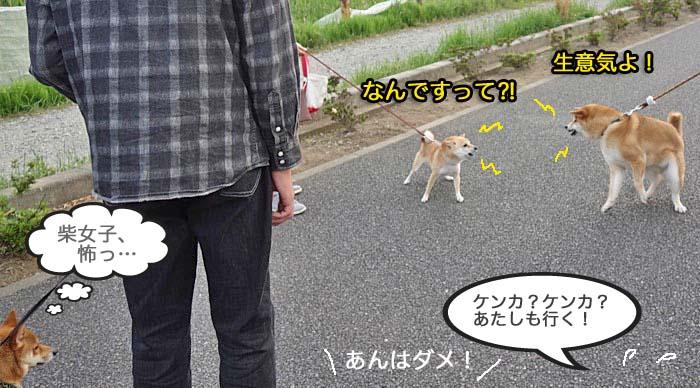 11日夕ブログ8