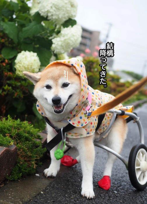 19日夕ブログ7