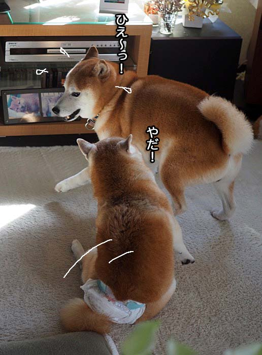 30日夕ブログ11