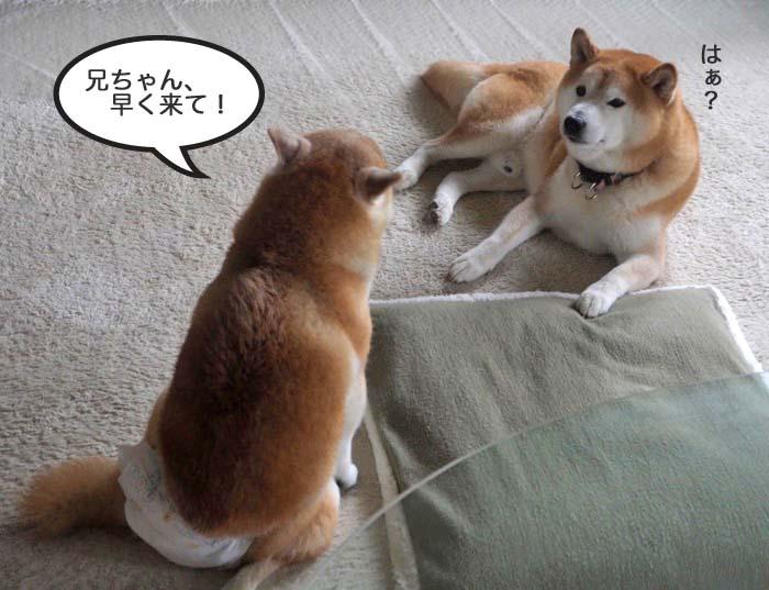 16日夕ブログ2