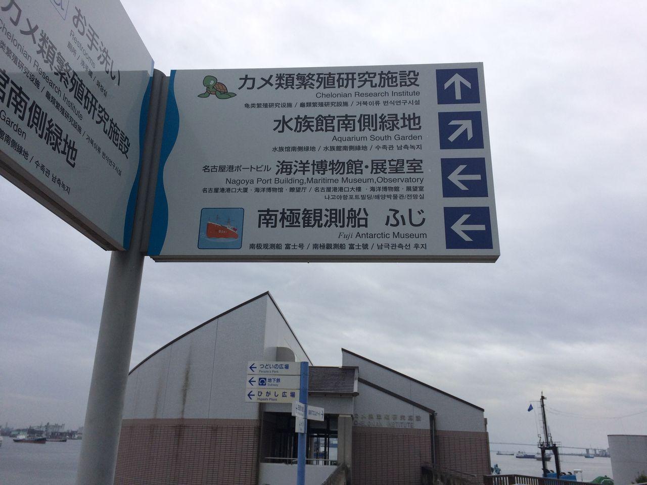 (愛知県)名古屋港水族館 カメ類繁殖研究室 : 主食は水族館です