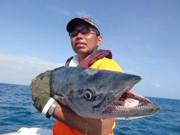 「ワフー 魚」の画像検索結果