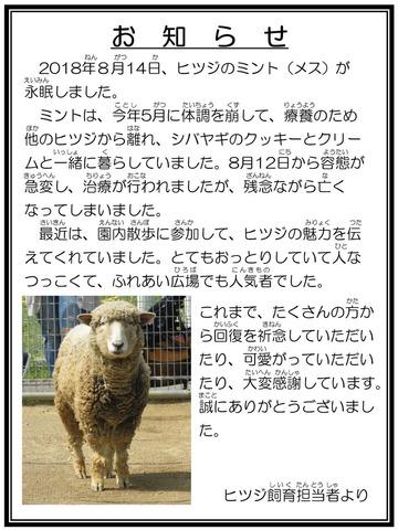 ☆訃報 ヒツジ ミント 担当者より