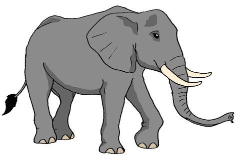 アフリカゾウ1カラー