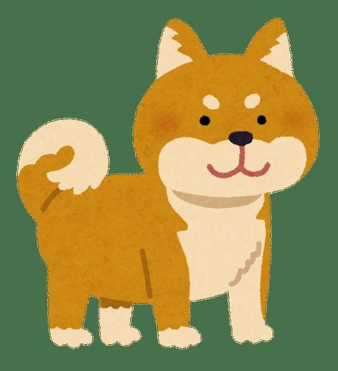 dog_shibainu_brown