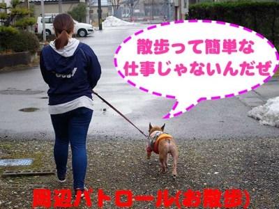 とある日の看板犬アグーの1日に密着!! part3