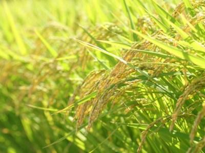 秋は頭皮の痒みや抜け毛等、皮膚トラブルが増える季節です