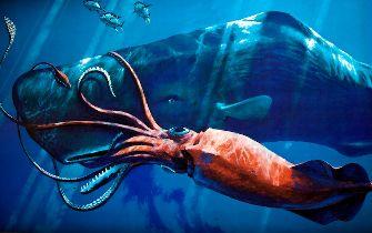 「ダイオウイカ」 深海の怪物巨大イカ : X図鑑 -巨大生物UMA・UFO-