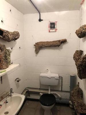 tualet-s-paukami_01