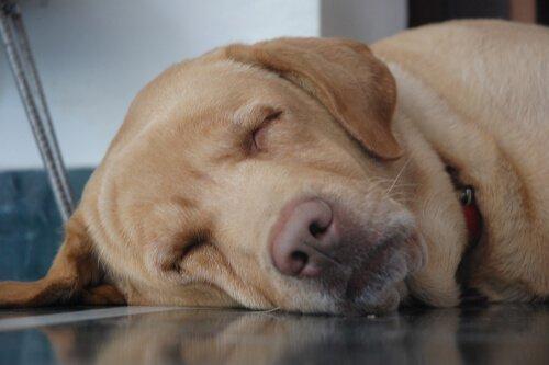 気持ち良さそうに寝てる犬の寝顔って良いよね7