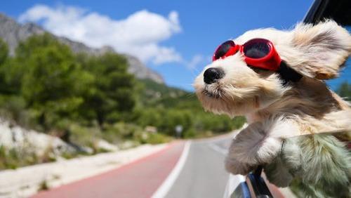 車の窓から顔を出して風と戯れる犬画像