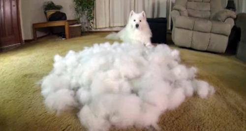 毛ほとんど落ちない犬教えてくれ