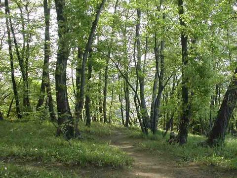 武蔵野の林