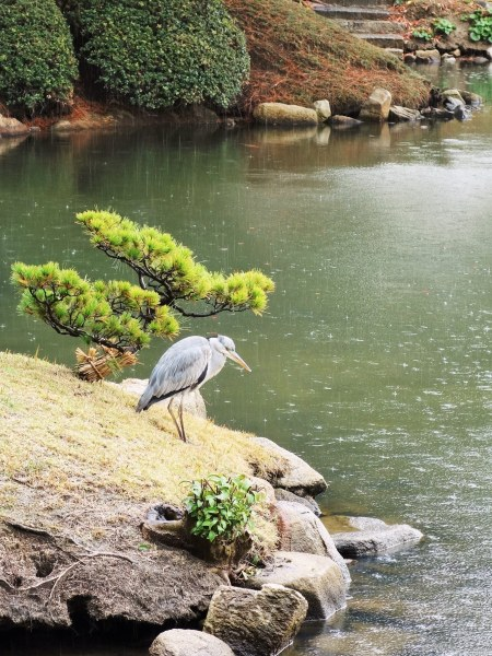 Japanese bird on edge of Takuei Pond