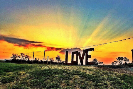 lockn love