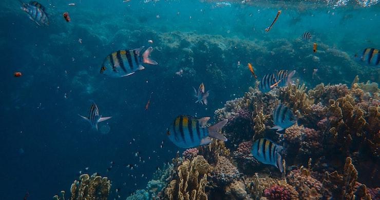 Science, coral reef, speakers, underwater, fish, speakers revive reefs