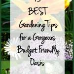 13 Best Gardening Tips