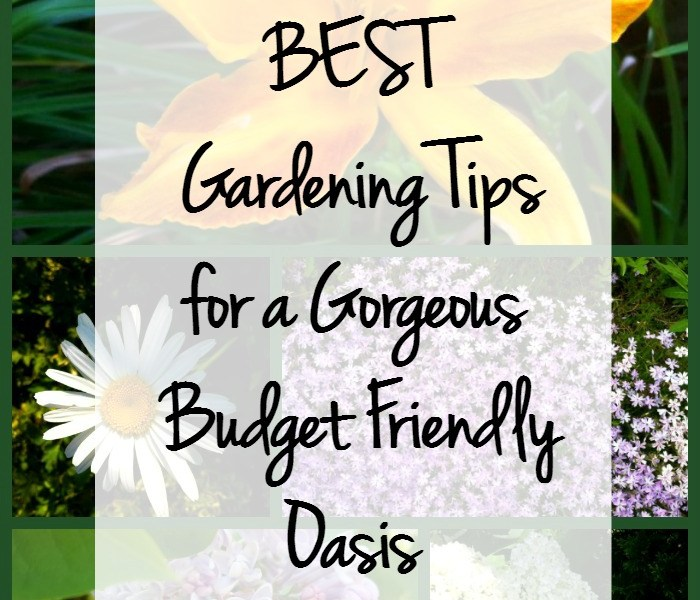 13 Best Gardening Tips for a Gorgeous Budget Friendly Oasis