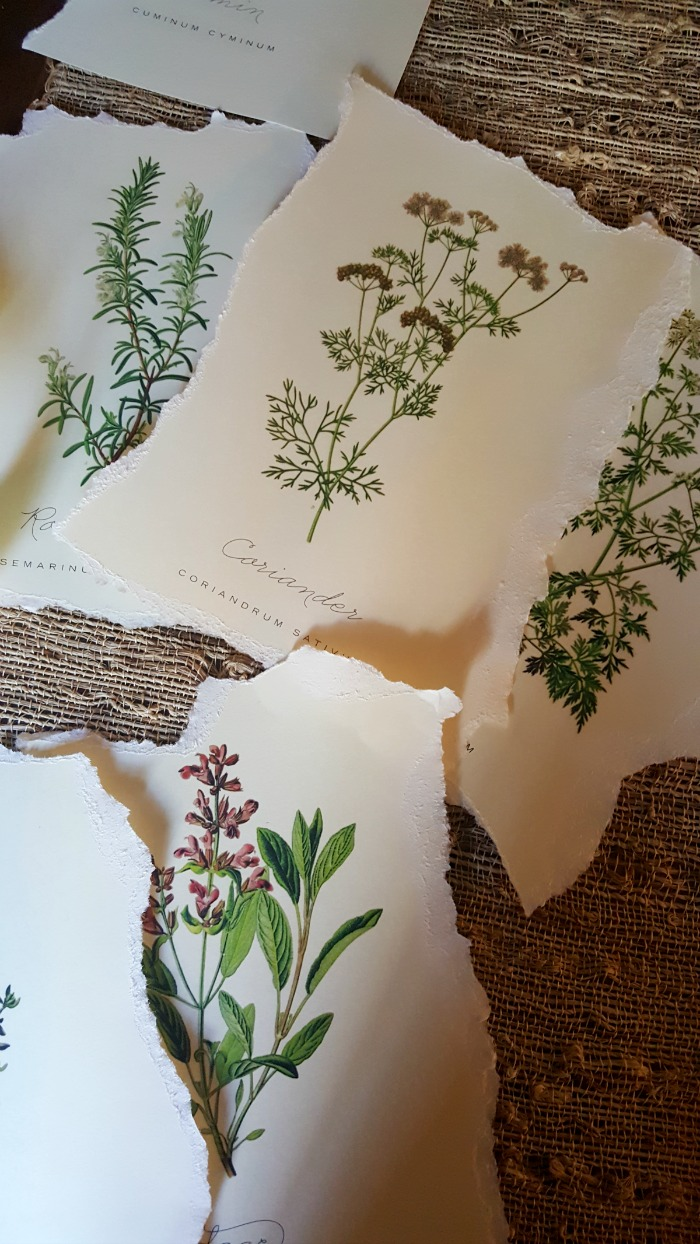 Looking for inexpensive art? See how I made my DIY Budget Friendly Art with these terrific FREE botanical prints using a $1 ReStore find.