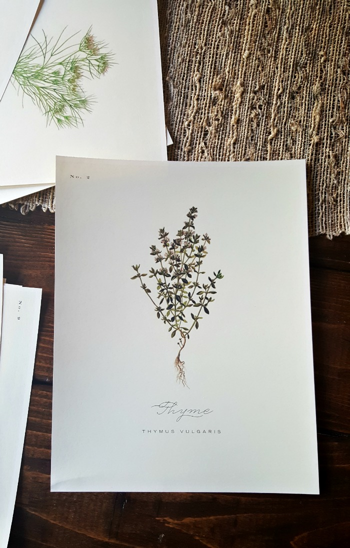 botanical print you can get the free download of 12 gorgeous botanicals here i had mine printed on ivory card stock i wasnu0027t exactly sure how i was going