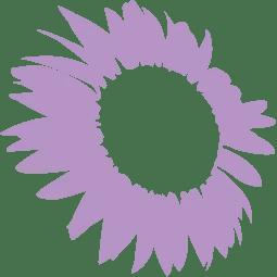 Live Hannahs Hope Purple Sunflower.