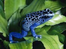 Reptiles amp Amphibians live knowledge world