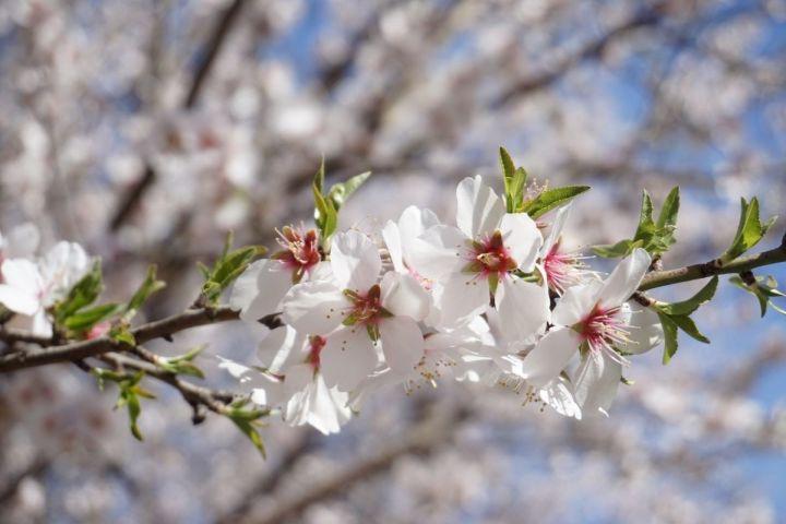 white blossom flowers