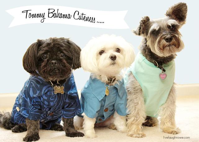 Furry Friends in Tommy Bahama apparel from Petsmart