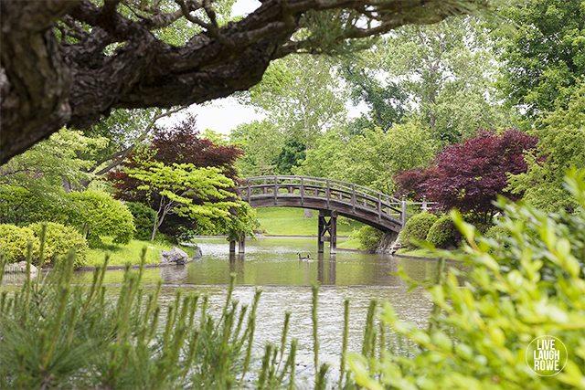 Beautiful Missouri Botanical Gardens. www.livelaughrowe.com