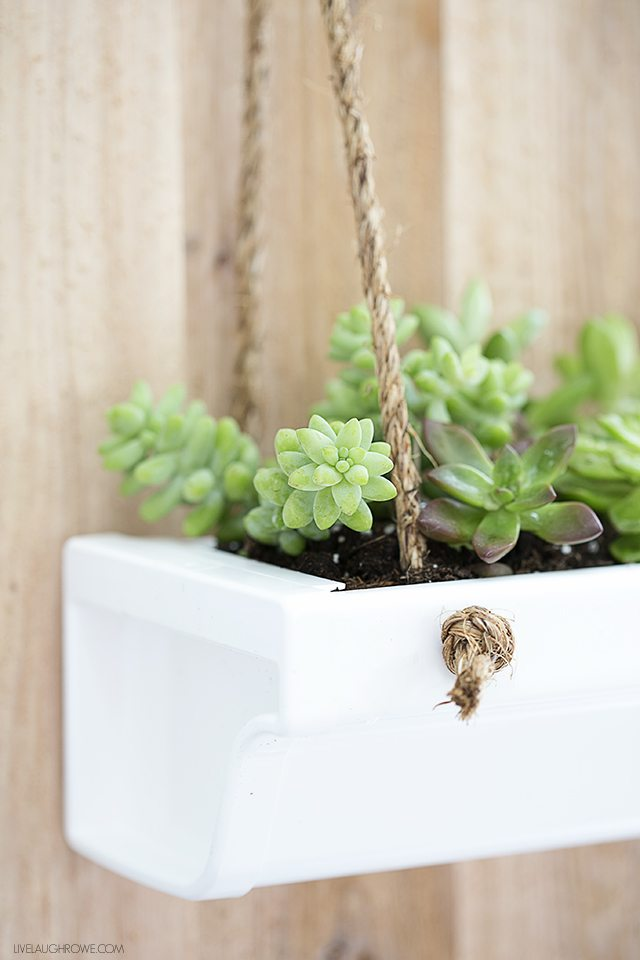 This Rustic Hanging Gutter Planter is a perfect home for Succulents! Find the tutorial at livelaughrowe.com
