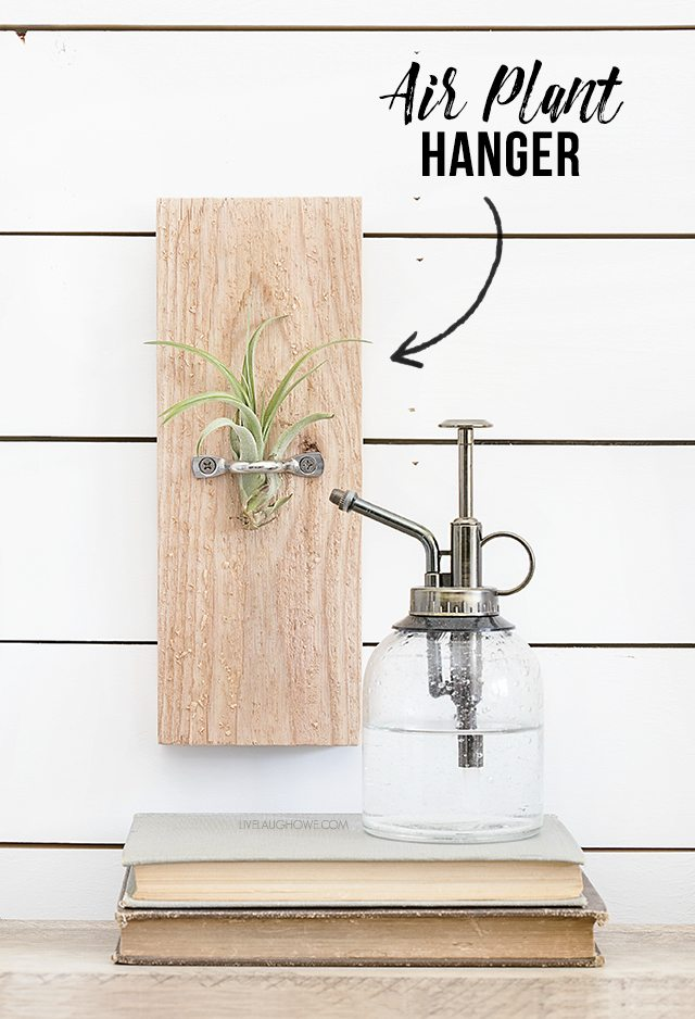 A DIY Air Plant Hanger that is great to display air plants throughout your home. livelaughrowe.com