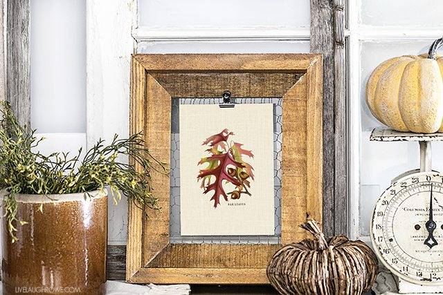 Add a little festive charm to you fall decor with this oak acorns and leaves printable. livelaughrowe.com