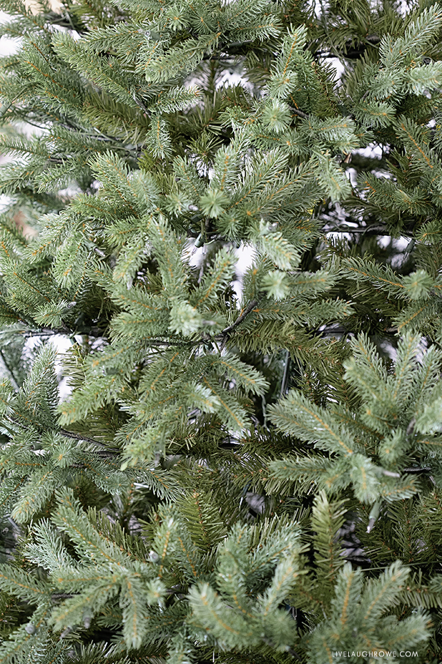 Noble Fir Tree Branches