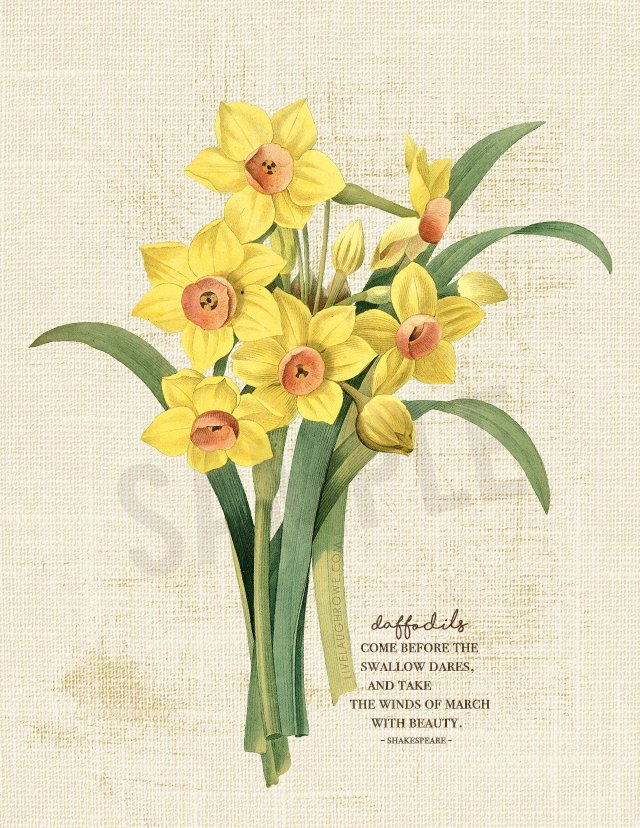 Printable of Daffodils within Winter's Tale quote