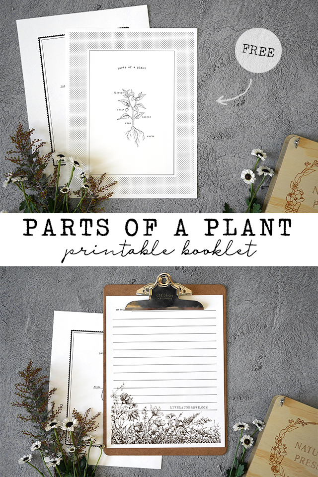 Images of the Booklet Parts of a Plant for Kids