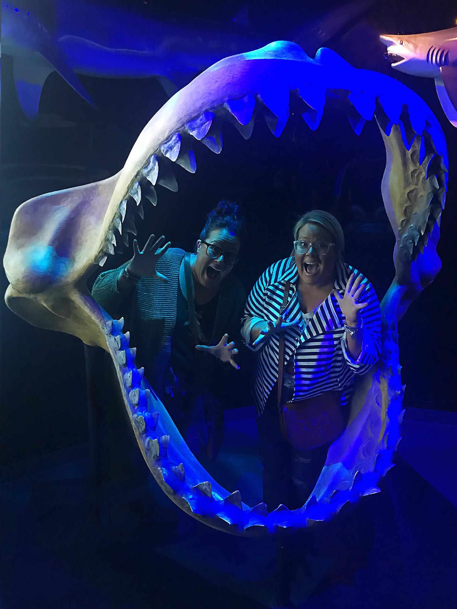 Two Goofballs in Sharks Mouth