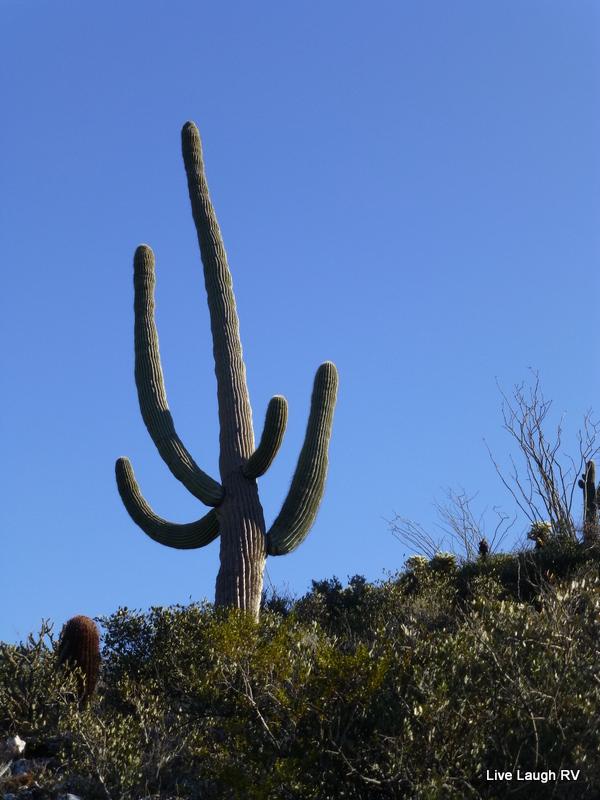 Saguaro Cactus Live Laugh Rv
