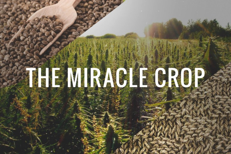 hemp-the-miracle-crop