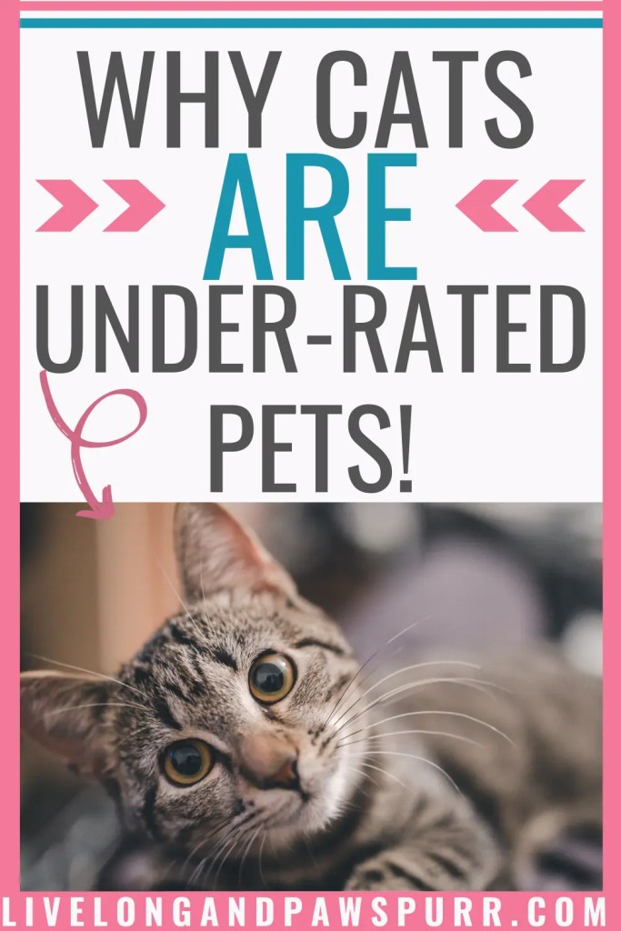 Why Cats Are The Most Under-Rated Pets #catrules #catfacts #catsareawesome
