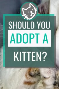 should I adopt a kitten