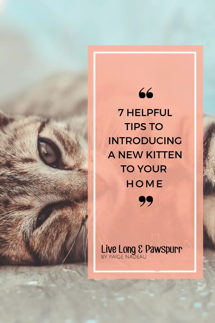 7 Helpful tips to introducing a new kitten to your home!