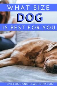 What Size Dog is Best For You? #dogbreeds #dogsize #dogadoption #puppyadoption #doghacks